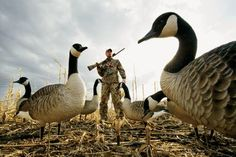 Zink™ Avian-X AXF Series ­Flocked Full-Body Canada Goose Decoys