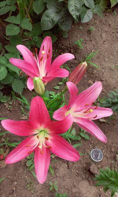 Garden, Plants, Horsehair, Garten, Lawn And Garden, Gardens, Plant, Gardening, Outdoor