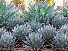 Garden ideas, Mediterranean plants, Water wise garden, Low maintenance garden, A.