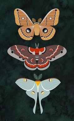 Scott Partridge - illustration - North American Saturniid moths
