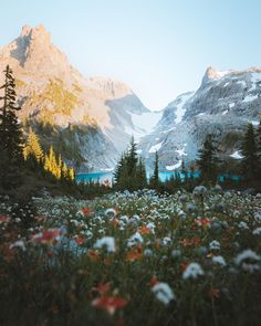 Wildflower fields at my favorite spot Washington State.. [OC] [2398 x 3000] - nathanielthewise - #travel #photography #adventure #amazing #beautiful