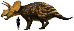 "Prehistoric taxonomy | Eotriceratops xerinsularis (""dawn triceratops"")..."