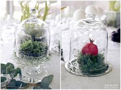 Arendsig: Charl & Mynderd - Just Judy Photography Colour Pop, Color, Terrarium, Wedding Decorations, Photography, Home Decor, Terrariums, Photograph, Decoration Home
