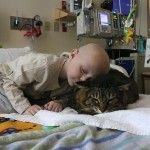 """Cat Comforts Patients at Children's Hospital. Landon Ames, who is 3 years old, snuggles up with Huck Finn, a 16-pound cat that does the rounds in the pediatric hematology/oncology unit at Doernbecher Children's Hospital. Huck Finn loves to make himself at home. His owner, Carol Markt, said he has a way of making himself """"heavy when he's happy,"""" so he's harder to pick up and move."""