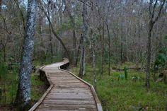 Hikes near Cedar Key   Florida Hikes!