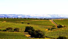 McLaren Vale wine region (5.8.13, Pic III)