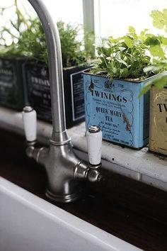 growing herbs in tea tins. cute!