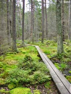 Hiking in Sweden. This looks very similar to what we hiked yesterday.