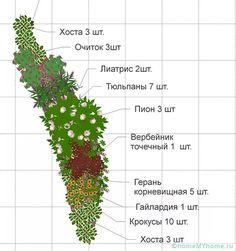 схема клумбы непрерывного цветения из многолетников: 16 тыс изображений найдено в Яндекс.Картинках