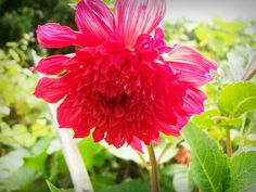 """""""O que mata um jardim não é o abandono. O que mata um jardim é esse olhar de quem por ele passa indiferente… E assim é com a vida, você mata os sonhos que finge não ver."""" Mario Quintana"""