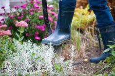 Zielony Zagonek Jak uprawiać zioła zimą na parapecie? Triki, które musisz znać - Zielony Zagonek