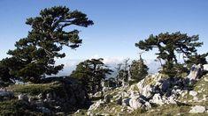 In occasione della recente pubblicazione delle nuove carte escursionistiche, ecco una proposta di itinerari naturalistici nel cuore del Massiccio a cavallo fra