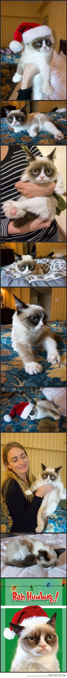Grumpy Cat Visits New York City…