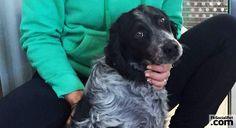 NOTIZIA FLASH: Ulisse, il cane recuperato dalle macerie, è vivo e sta bene! Sta bene Ulisse, il cane estratto dalle macerie a Norcia nel dopo terremoto! #Iloveanimals #Ilovepets #FbSocialPet