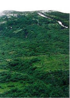 furka 1995-1997