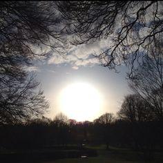 """Springtime sunshine, taken whilst on a Saturday stroll"""