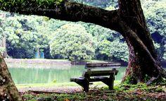 Bangku Taman Kebun Raya Bogor