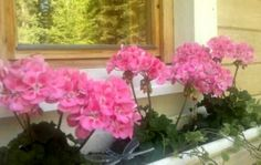 More flowers - at home this time.