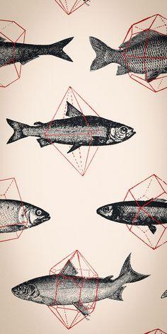 Fishes In Geometrics Wallpaper by Florent Bodart   FEATHR.com