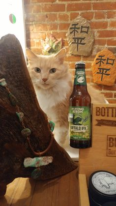 Lyra supports local brewery Flying Bison Local Brewery, Support Local, Bison, Ice, Cats, Gatos, Ice Cream, Kitty, Cat