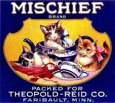 Faribault Minnesota Mischief Kitten CatsOrange Citrus Crate Label Art Print