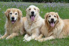 Tyler, Bentley and Brie