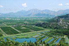 Neretva de vallei van de delta van de rivier in Zuid-Kroatië - Stockbeeld: 1463474