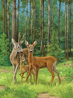 Translated version of test. Wildlife Paintings, Wildlife Art, Animal Paintings, Deer Paintings, Beautiful Birds, Animals Beautiful, Animals And Pets, Cute Animals, Deer Photos