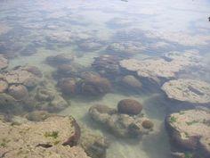 Marine National Park, Jamnagar District of Gujarat