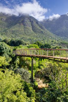 Kirstenbosch Centenary tree canopy walkway / Mark Thomas Architects