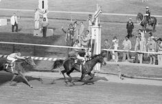 1977: SEATTLE SLEWSeattle Slew blew away the field in The Belmont Stakes winning by four lengths to seize the Triple Crown. Seattle Slew was not expected to be a great thoroughbred and was purchased for the bargain price of $17,500. He died in 2002, the last of the living Triple Crown winners.
