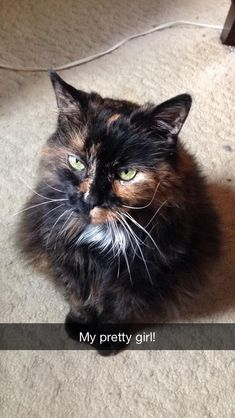 Sassy was a gift to me on my first day of kindergarten. After 17 happy years of snuggles and belly rubs today she was put to sleep. Ill miss you pretty girl! by johnnaboo cats kitten catsonweb cute adorable funny sleepy animals nature kitty cutie ca