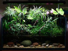 Plantado sumergido y emergido