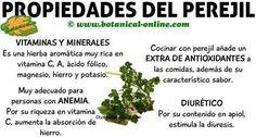 propiedades del perejil y beneficios para la salud de la hierba