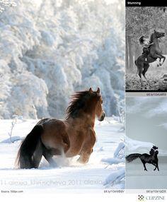 Gorgeous Horses