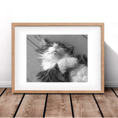 Cat PrintsSleeping Cat PrintsBlack and White by 2manylattes