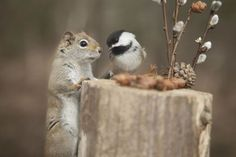 Photographs of squirrels and birds eating together are absolutely adorable