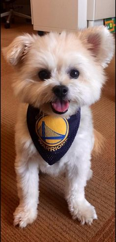 newest 34626 a34ae 9 Best GSW images in 2014 | Golden state warriors, Stephen ...