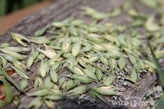 Oregon's Wild Harvest Organic Oats #organic #oregon #herb