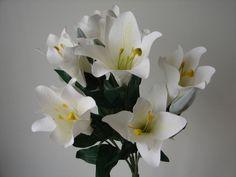 6 Lilienbüsche Lilien Busch weiß cream 60cm