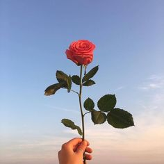 Rose for you.