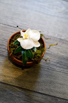 For this modern tropical elopement, the groom's boutonniere was a white Phalaenopsis orchid with a green palm leaf accent . | Bob Gail Events #tropicalwedding #elopementideas #groomsboutonniere Groom Boutonniere, Boutonnieres, Phalaenopsis Orchid, Orchids, Different Types Of Flowers, Modern Tropical, Groom And Groomsmen, Videography, Event Planning
