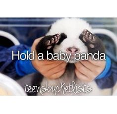 wheres the panda, peek-a-boo! omg so cute love him, I want a baby panda, THEY ARE SO CUTE! Best Friend Bucket List, Bucket List Life, Life List, Summer Bucket Lists, Alaskan Klee Kai, Cute Funny Animals, Funny Animal Pictures, Panda Bebe, Hello Panda