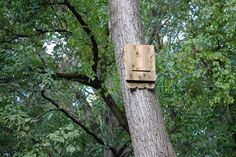 Earth Day Activities: Easy instructions for making the perfect bat shelter #ecofriendlycrafts #ecofriendly #earthdaycrafts #greencrafts