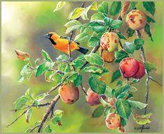 Lang Wallpapers   September 2014   Songbirds
