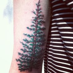 My spruce tree, done by Eddie Oakes at Artfuel in Wilmington, NC