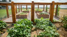 grow produce in custom made gardening beds. #gardening #landscaping