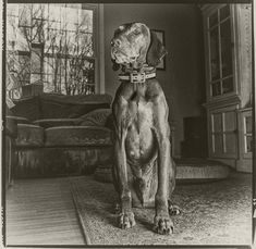 Luca thinking about a dog nap. Grey Pictures, 120 Film, Vizsla, Dog Photography, Pet Portraits, Over The Years, Maryland, Pup, Statue