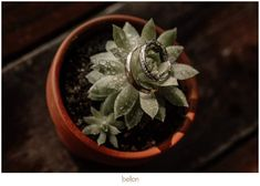 Creative Wedding Photography, Succulents, Plants, Succulent Plants, Plant, Planets