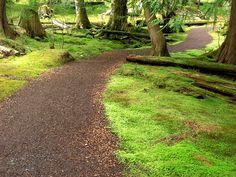 Bloedel Moss Garden-path